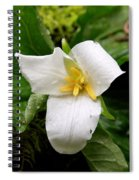 Life's Moments Spiral Notebook