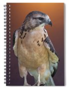 Light Morph Immature Swainsons Hawk Spiral Notebook