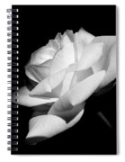 Light On Rose Black And White Spiral Notebook