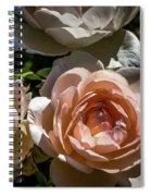 Light Pink Roses Spiral Notebook