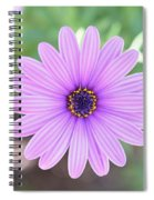 Light Purple Gazania Macro 1  Spiral Notebook