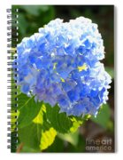 Light Through Blue Hydrangeas Spiral Notebook