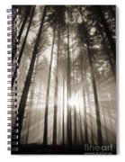 Light Through Forest Spiral Notebook