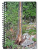 Lightning Strike On Tree Spiral Notebook
