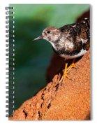 Lil Bird Spiral Notebook