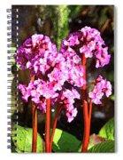 Lil List Spiral Notebook