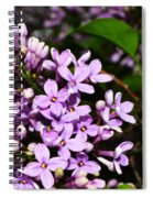 Lilac Bush In Spring Spiral Notebook