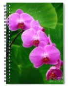 Lilac Orchid Beauties Spiral Notebook