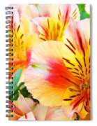 Lilies Art Prints Pink Yellow Lily Flowers 1 Giclee Prints Baslee Troutman Spiral Notebook