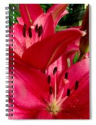 Lilies Of The Oaks Spiral Notebook