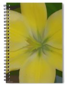Lilly With Artistic Beauty Spiral Notebook
