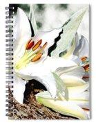 Lily 4 Spiral Notebook