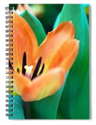 Lily #4 Spiral Notebook
