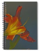 Lily Abstract Dark Background Bright Flower Spiral Notebook