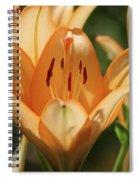 Lily - American Cheerleader 19 Spiral Notebook