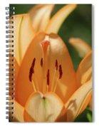 Lily - American Cheerleader 20 Spiral Notebook