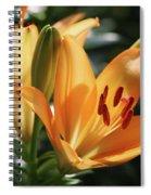 Lily - American Cheerleader 22 Spiral Notebook