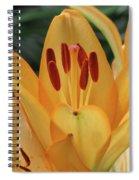 Lily - American Cheerleader 31 Spiral Notebook