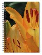 Lily - American Cheerleader 33 Spiral Notebook