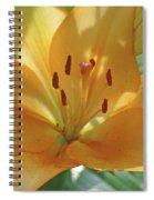 Lily - American Cheerleader 38 Spiral Notebook