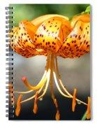 Lily Flowers Art Orange Tiger Lilies Giclee Baslee Troutman Spiral Notebook