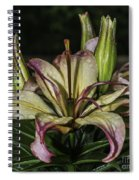 Lily In The Rain Spiral Notebook