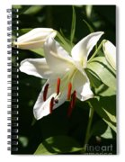 Lily Of White Spiral Notebook