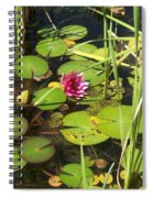 Lily Pad Pond In High Noon Sun Spiral Notebook