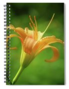 Lily Picture - Daylily Spiral Notebook