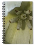 Lily Poster Spiral Notebook