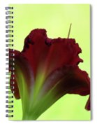 Lily Red On Yellow Green - Daylily Spiral Notebook