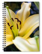 Lily Splendor Spiral Notebook