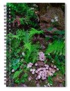 Limberlost Spiral Notebook