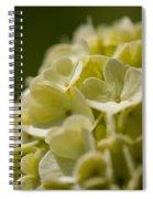 Lime Hydrangea Spiral Notebook