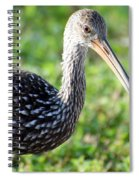 Limpkin Checking For Snails. Spiral Notebook