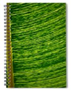 Lincoln Park Conservatory Palm Spiral Notebook