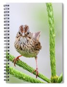 Lincoln's Sparrow Spiral Notebook