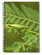 Linear Winged Grasshopper Spiral Notebook