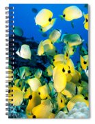 Lined Butterflyfish Spiral Notebook