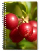 Lingonberry Spiral Notebook