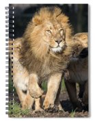 Lion Spiral Notebook