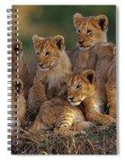 Lion Cubs Spiral Notebook
