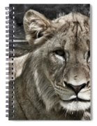 Lion Portrait Spiral Notebook
