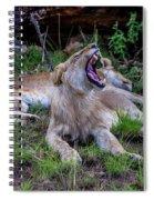 Lion Roar/2 Spiral Notebook