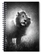 Lion Shaking Off Water Spiral Notebook