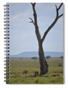 Lion Under Tree Spiral Notebook