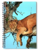 Lioness In Africa Spiral Notebook