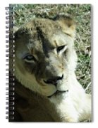 Lioness Peering Spiral Notebook