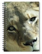 Lioness Up Close Spiral Notebook