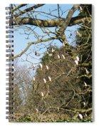 Lions Guarding Garden Spiral Notebook